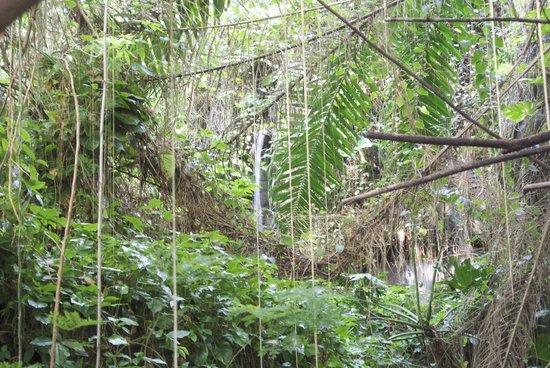 Biosphere 2: The rainforest exhibit