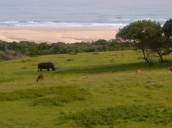 Oceana Beach and Wildlife Reserve : Taken on our deck