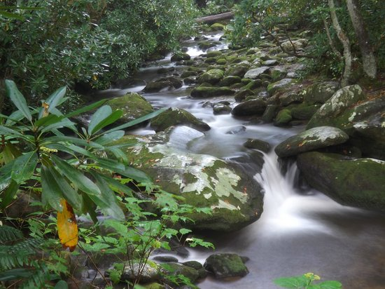 Roaring fork picture of roaring fork motor nature trail for Roaring fork smoky mountains