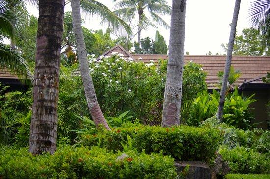 Bo Phut Resort & Spa: General view of gardens