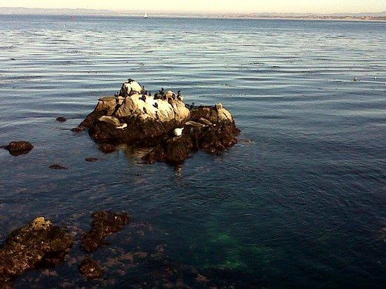 Monterey Bay: Lovely nature