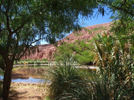 Alto Atacama Desert Lodge & Spa: view from the garden