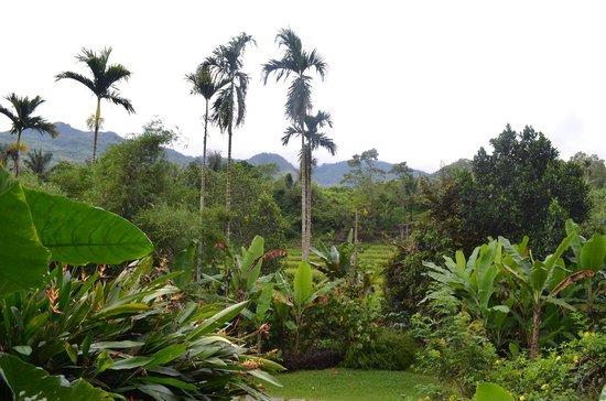 Kelimutu Crater Lakes Eco Lodge, Moni, Flores: Aussicht