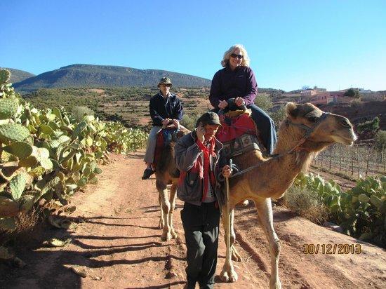 Atlas and Sahara Day Tours : Camel ride