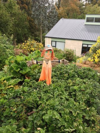 Gumtree Farmstay: Lucy's scarecrow.