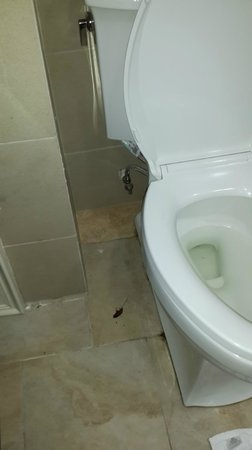 Radisson Grenada Beach Resort : Dead cockroach in bathroom