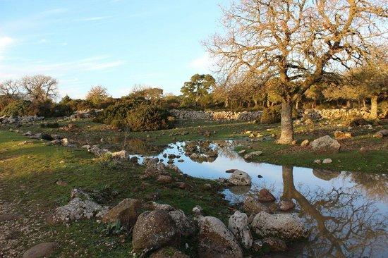 Parco della Giara Tuili: Il parco della Giara al Tramonto