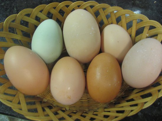 Golden Stage Inn Bed and Breakfast: Fresh and gorgeous eggs from our own backyard hens...yum!
