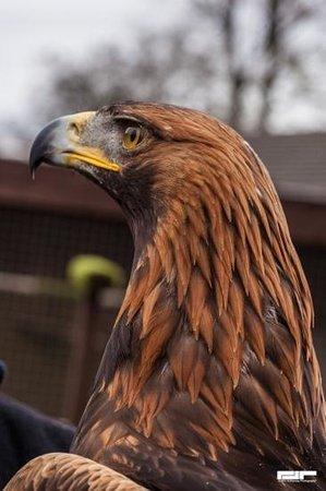 """Loch Lomond Shores: """"Orla"""" the eagle."""