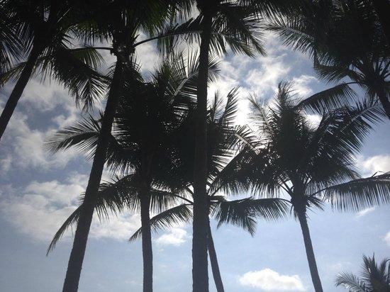 Hotel Punta Islita, Autograph Collection: beach palm trees