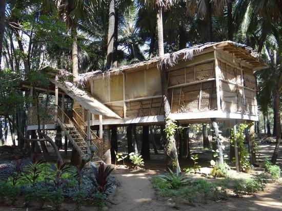 Manoribel : Tree House