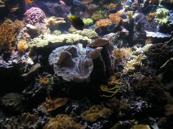 Shedd Aquarium Picture Of Shedd Aquarium Chicago
