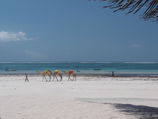 Waterlovers Beach Resort: Camels on the beach passing by