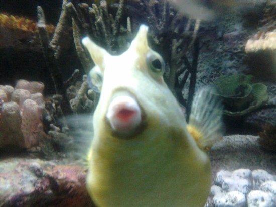 National Aquarium, Baltimore: photogenic fish!