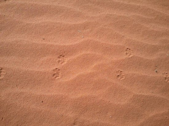 Southern Utah Adventure Center: These tracks are 1/4 inch in size. We didn't see the creature that made them.