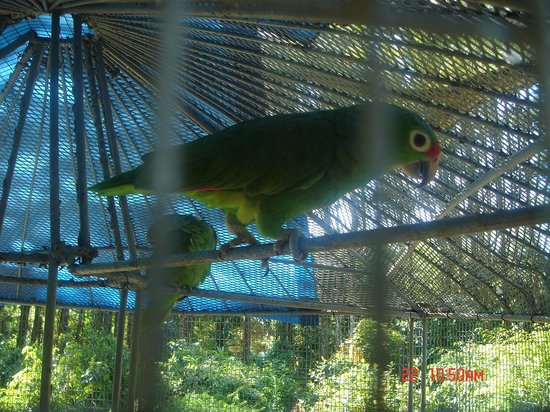 Anton Valley : parrot