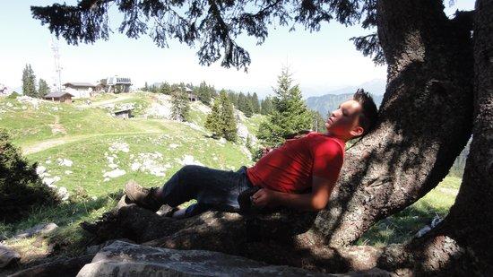 Camping Le Verger Fleuri: de bergen in