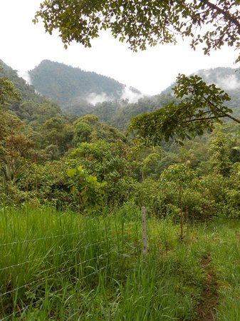Las Tangaras Reserve: view on hike to lodge