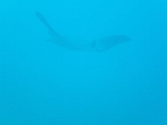 Dive Cabo: 12/2013