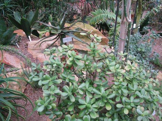 Botanischer Garten: Botanical Garden
