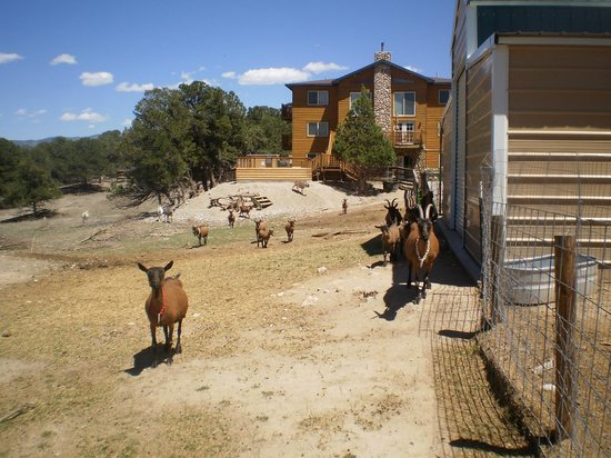 Mountain Goat Lodge: Goat lovers please come pet us!