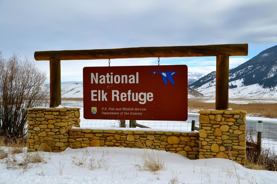 Wildlife Expeditions of Teton Science Schools: Elk Refuge
