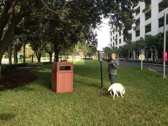 Hyatt Regency Orlando : Dog walking area complete with bags and trash