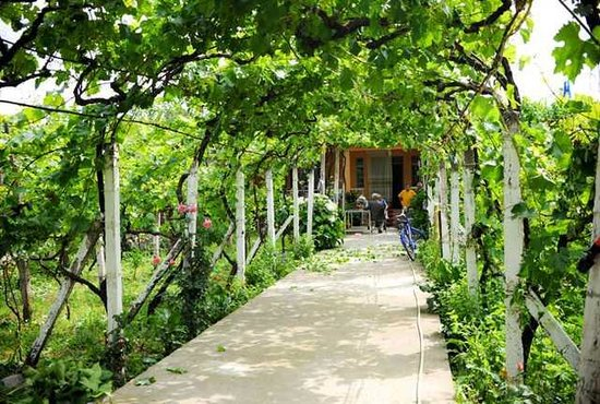 Florian Shkodra Guesthouse and Hostel: vines