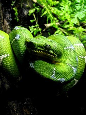 National Aquarium: Rainforest Exhibit
