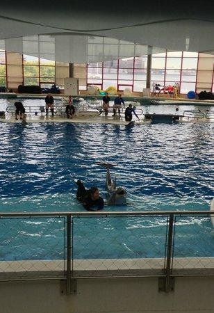 National Aquarium: Dolphin Training