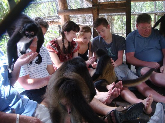The Jungle Place - Tours: Monkeys everywhere...  It was the best!!!