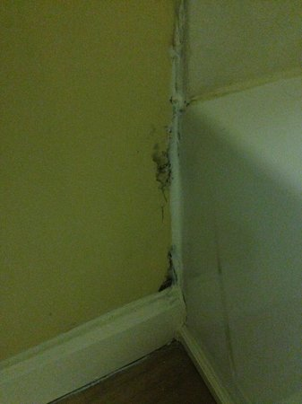 TownePlace Suites Birmingham Homewood: Mold and rot