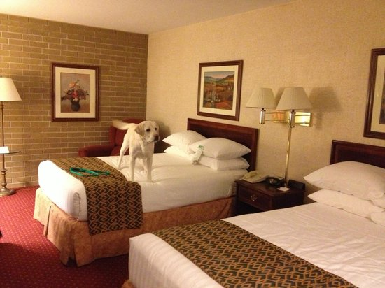 Drury Inn & Suites Atlanta Morrow: Pet friendly and would stay here again