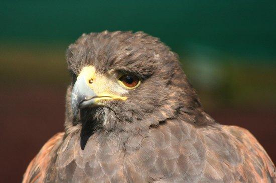 Falcon Ridge Bird of Prey Centre: bird