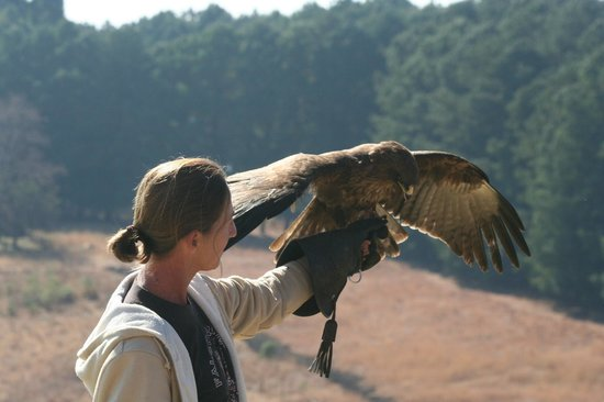 Falcon Ridge Bird of Prey Centre: Allison