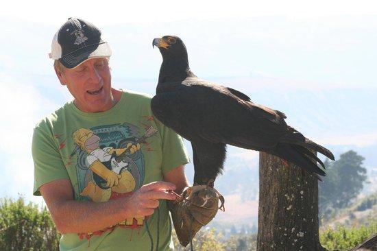 Falcon Ridge Bird of Prey Centre: Greg