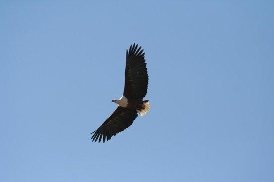 Falcon Ridge Bird of Prey Centre: Birds
