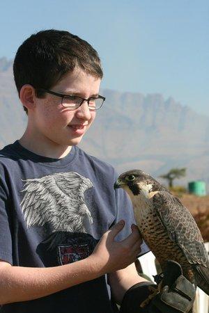 Falcon Ridge Bird of Prey Centre: Teen handling falcon