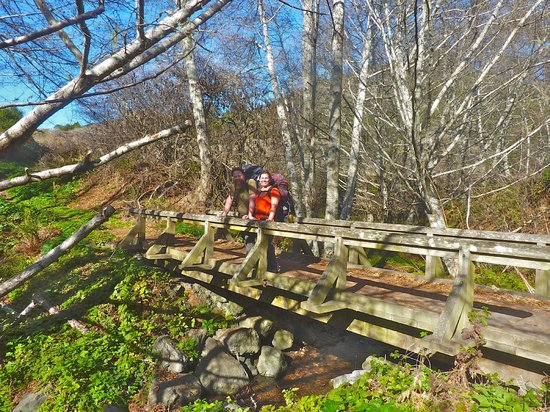 Point Reyes Hiking Trails: There are several beautiful creek crossing with these lovely bridges on the Coast Trail