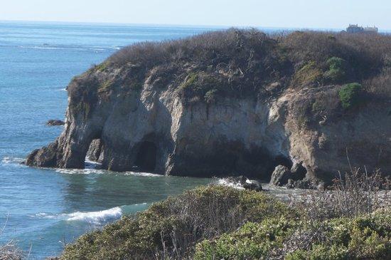 Ano Nuevo State Reserve: Trail View