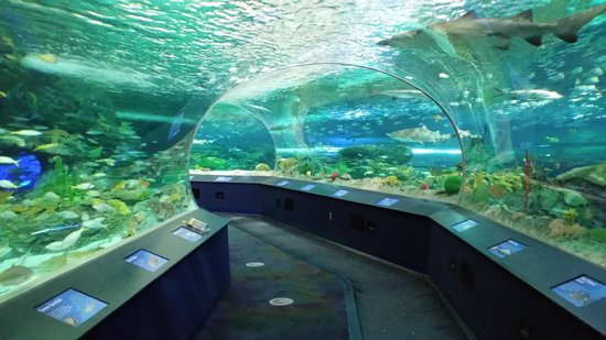 Ripley aquarium coupons toronto 2018