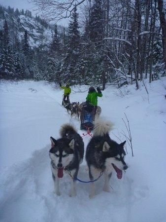 L'Anse-Saint-Jean, Kanada: expédition à chiens de traîneau