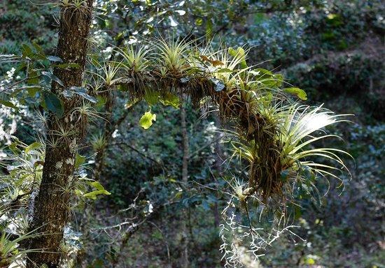 Tierraventura Ecoturismo  Day Tours: Bromeliads everywhere