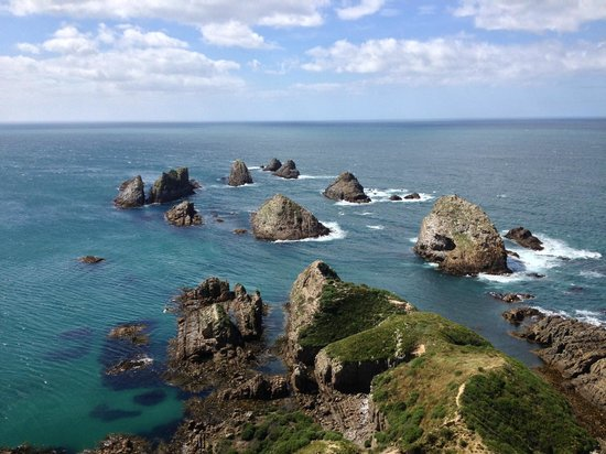 Nugget Point: Nuggets!