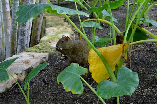 Royal Hideaway Playacar: Very nice animal,which lives in Resort area