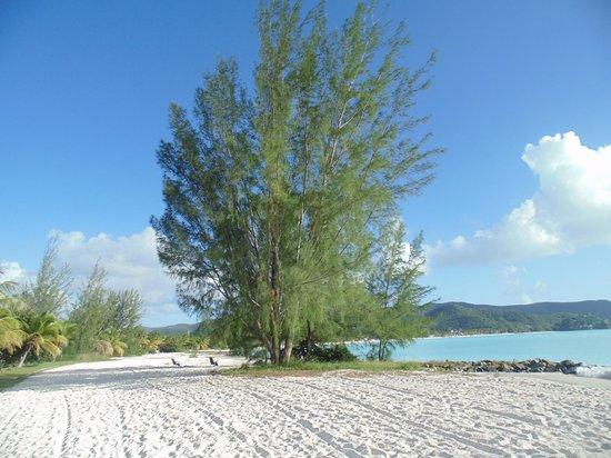 Tranquility Bay Antigua: Beach area