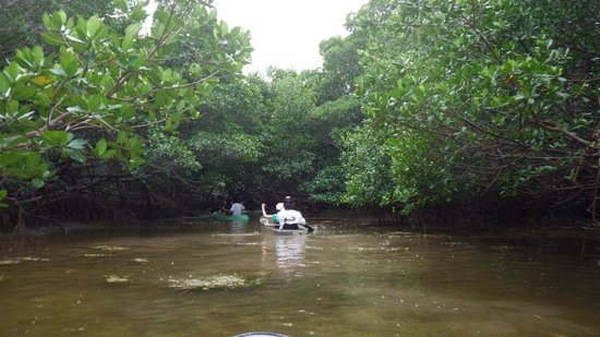 Clearly Unique Charters: Entering the Mangroves