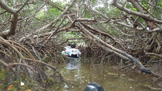 Clearly Unique Charters: Deeper Into the Mangroves