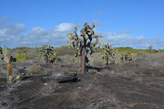 The Wall of Tears: Lava and cactus on the way to the Wall