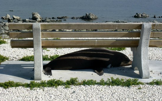 Sleepy Seal near the Whaler
